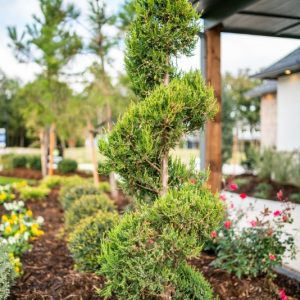 small trees and bushes Nelson Landscaping