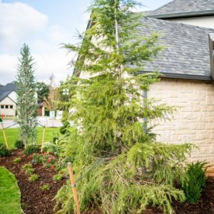 small trees and bushes planted by Nelson Landscaping Oklahoma