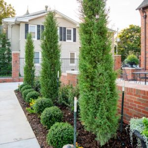 residential bushes along sidewalk