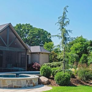 Pool landscape with Blue Atlas Cedars and Taylor Junipers