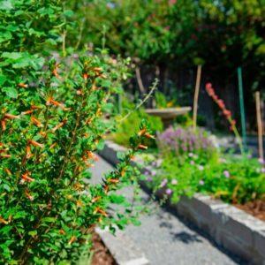 Backyard Garden Landscaping & Hardscaping