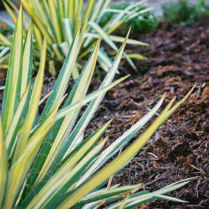 Backyard Landscaping Plantings