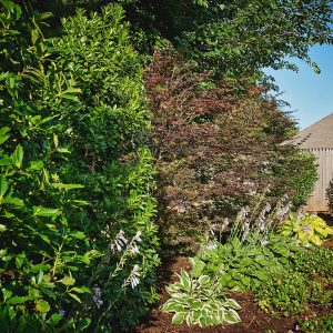 Backyard Landscaping Plantings, lighting, and irrigation