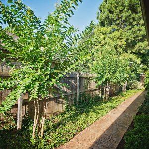 Backyard Tree Landscaping with Walkway