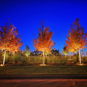 Well lit Landscaping by Nelson Landscaping Service in OKC