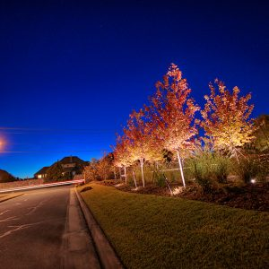 Belmont Farms neighborhood landscaping at night