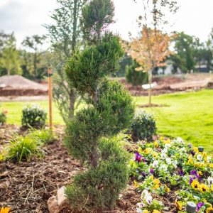 Landscaping with Tree and Plantings
