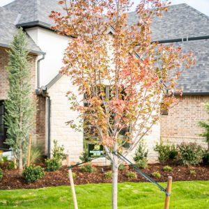 Tree residential landscaping project