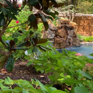 Pink flowers surrounding backyard pool by Nelson Landscaping in Oklahoma City