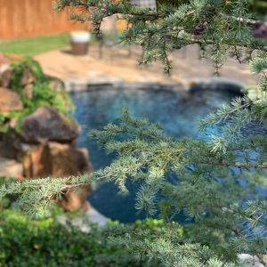 Fur tree and lush green landscaping by pool