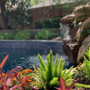 Inground Pool Landscaping with ferns and bright flowers