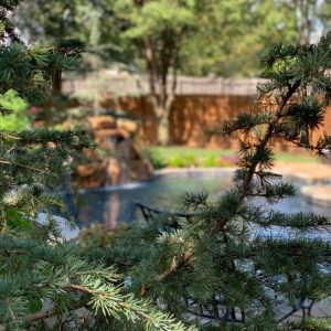 Backyard Pool Landscaping with Waterfall by Nelson Landscaping