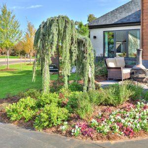 Front Yard Landscape Plantings