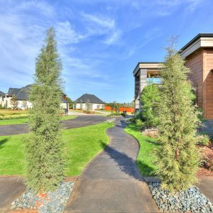 Driveway & Walkway Landscaping