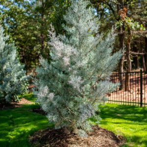 Backyard Tree Landscaping designed by Matteson Homes