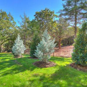 Backyard Tree and contemporary landscape design