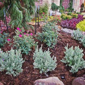 Bushes and plants in front yard Landscaping with Hardscaping