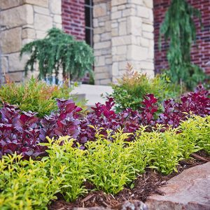 Multicolored Landscape Plantings
