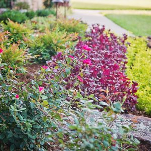 Colorful Front Yard Landscaping with Hardscaping