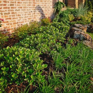 Front Yard Flower Bed by Nelson Landscaping
