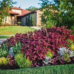 Nelson Landscaping Front Yard Flower Bed Landscaping at Town Square Edmond Community