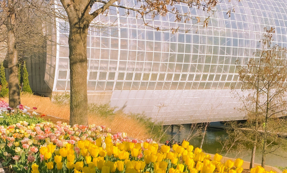Myriad Botanical Gardens - Oklahoma City, OK
